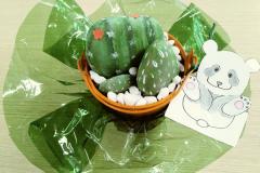 Cactus y oso