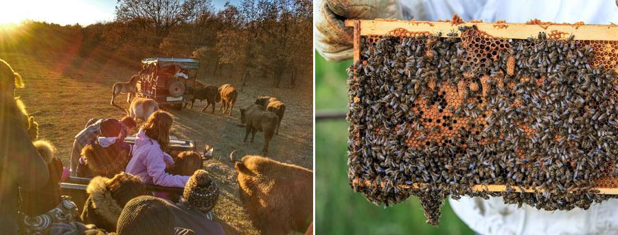 paleolitico-vivo-miel-abejas.jpg